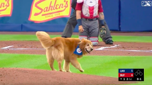 Bat dog runs onto field in middle of game