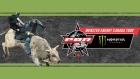 1150 Professional Bull Contest Graphic