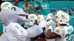 Dolphins celebrate