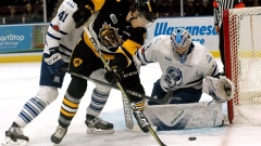 Hamilton Bulldogs making 'win now' moves in pursuit of Memorial Cup Article Image 0